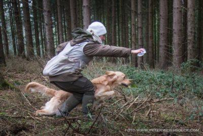 Šolanje psa - tečaj vzgoje in vohljanja