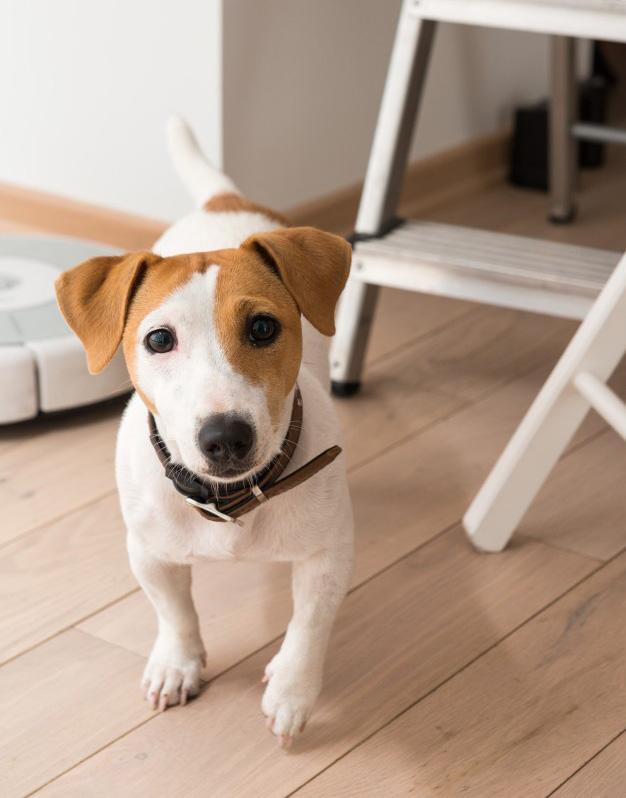 Varstvo psov - hotel za pse - obala - koper